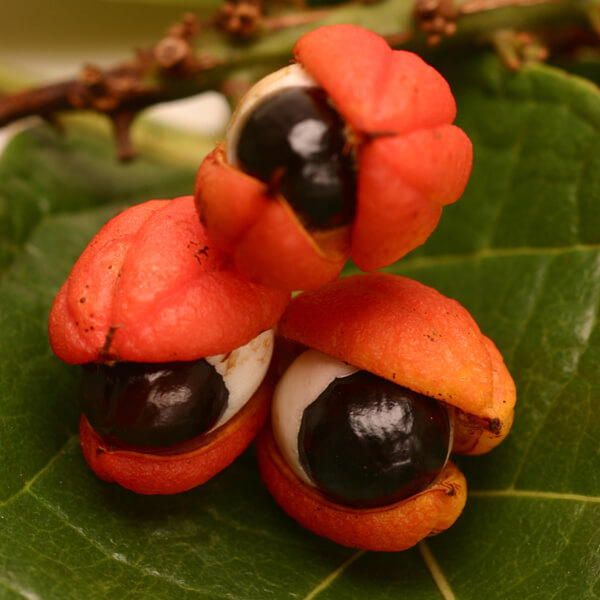 Paullinia Cupana (Guarana) Fruit Extract*